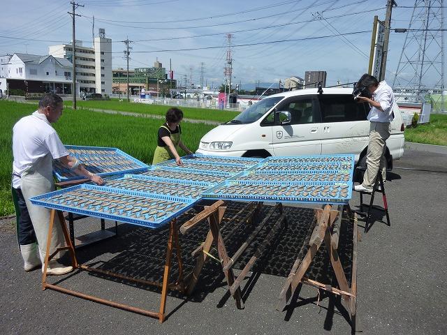 岐阜新聞さん、鮎の天日干し取材